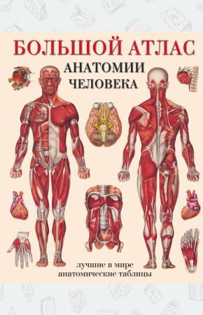 Махиянова Большой атлас анатомии человека