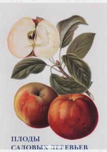 Плоды садовых деревьев (набор из 15 открыток)